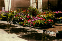 Flower Stall - Villeneuve sur Lot, France