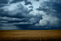Barley and Storm Clouds - Gouts, France