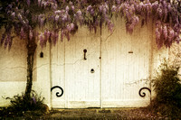 White Door and Wisteria - Vanxains, France